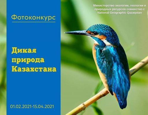 Минэкологии и National Geographic Qazaqstan запускают фотоконкурс «Дикая природа Казахстана»